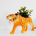 dosfamily-fixarummet-tiger