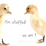 dosfamily-ducky