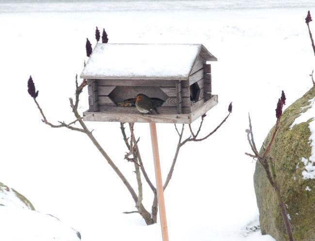 birdiedosfamily