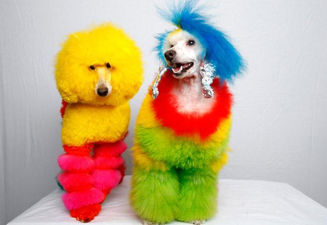 dog_grooming1