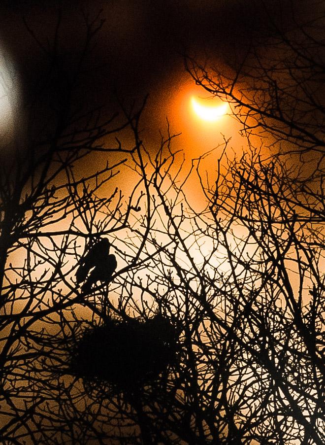 dosfamily-solareclipse1