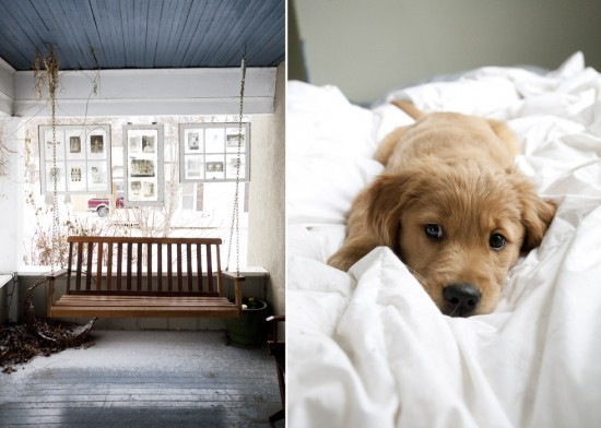 A porch swing and a puppy in an unmade bed
